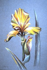 Color pencil drawing I did 25 years ago on site at the United States Botanic Garden.  We had WAY more than nine minutes to do this.