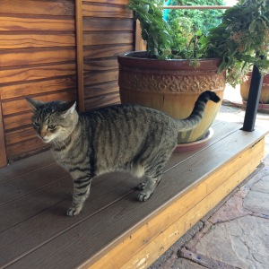 Our little cat friend seeing us off.